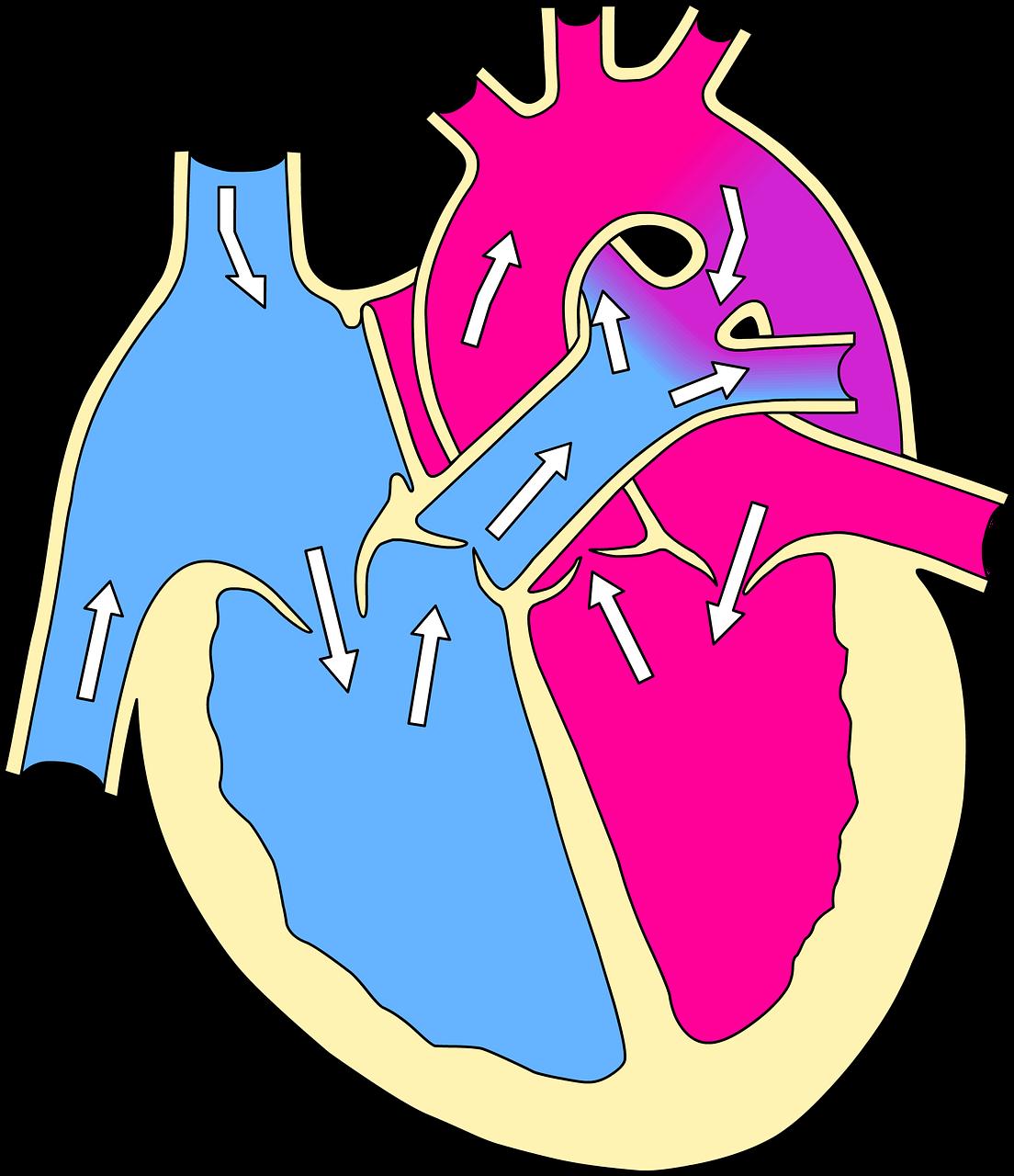 Zadbaj o zdrowie ! Zdrowe serce – echo serca w Poznaniu